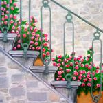 """Fragrant Stairs"" watercolor on paper, 17.5""x19.5"", $295, Reproductions available"